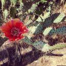 InstagramTroian-003836.jpg